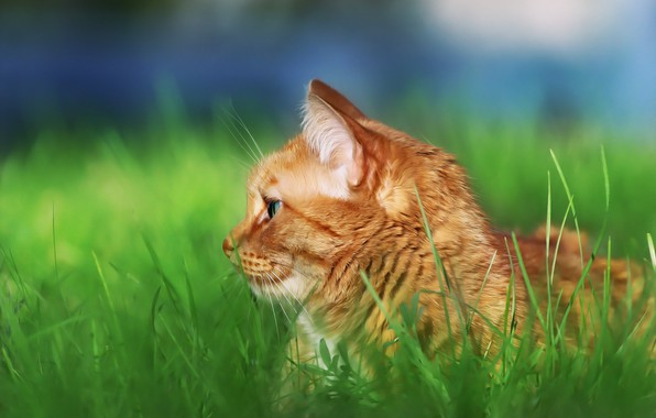 Picture cat, look, profile, weed