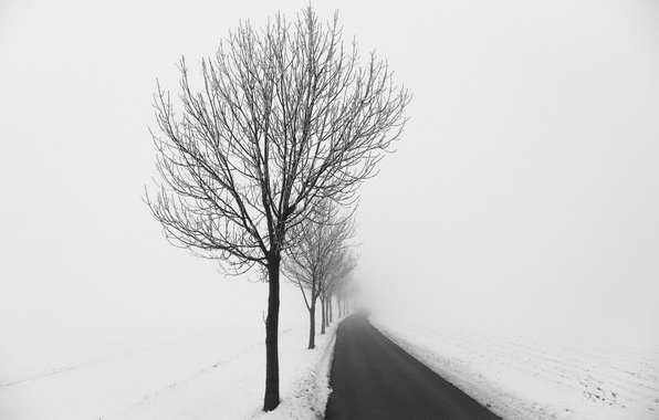 Picture winter, road, tree
