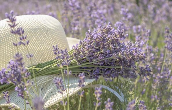 Picture mood, hat, a bunch, lavender