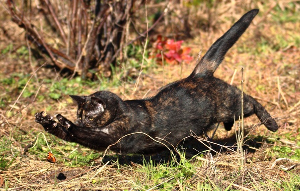 Picture cat, cat, jump, butterfly, hunting
