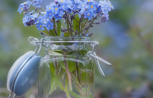 Picture blur, Bank, forget-me-nots