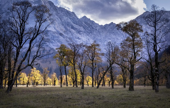 Picture trees, mountains, nature