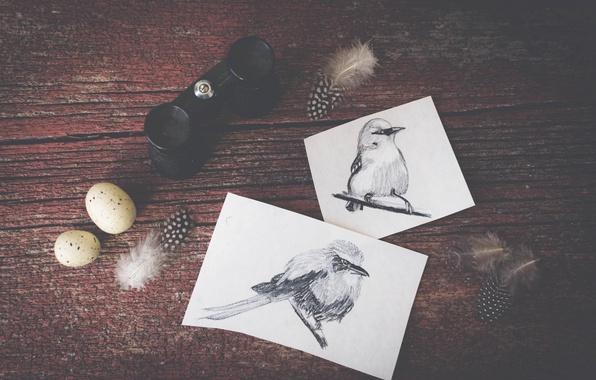 Picture birds, figure, eggs, feathers, drawings, binoculars, bird