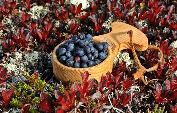 Picture berries, blueberries, scoop