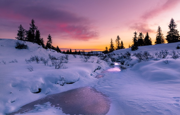 Picture winter, light, snow, trees, nature, paint, the evening, river