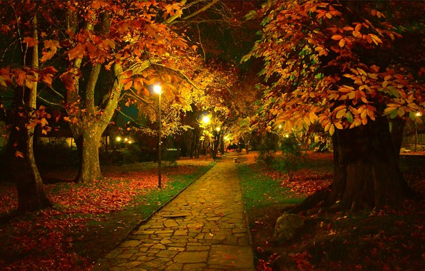 Picture Night, Autumn, Trees, Lights, Park, Fall, Foliage, Track, Night, Park, Autumn, Colors, Trees, Leaves, Path