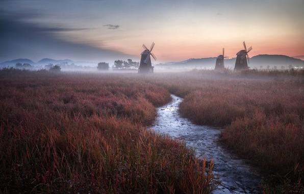 Picture grass, twilight, Holland, sky, field, landscape, nature, sunset, clouds, evening, fog, Netherlands, stream, mist, windmills