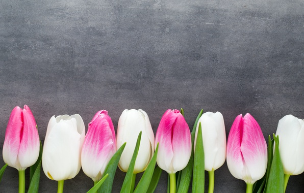 Picture flowers, bouquet, tulips, pink, white, white, fresh, pink, flowers, beautiful, tulips, spring