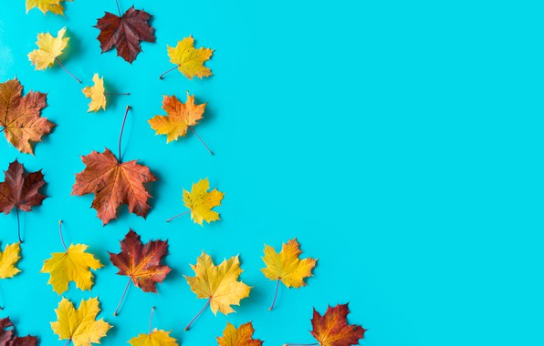 Picture leaves, background, maple