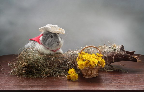 Picture flowers, tree, Guinea pig, dandelions, saloma
