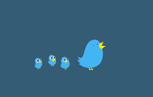 Picture birds, logo, beak, twitter