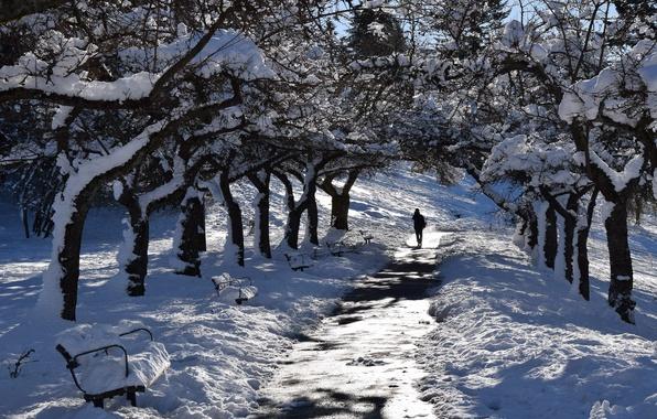 Picture winter, snow, street
