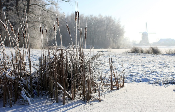Picture winter, fog, morning, reed