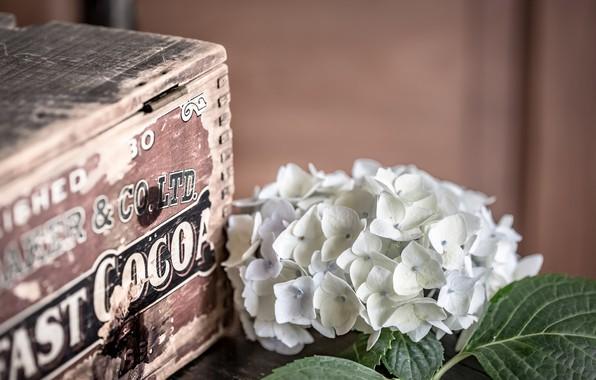 Picture box, box, hydrangea