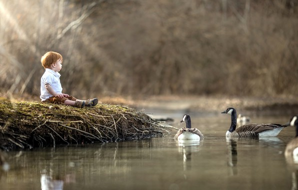 Picture lake, shore, boy, geese
