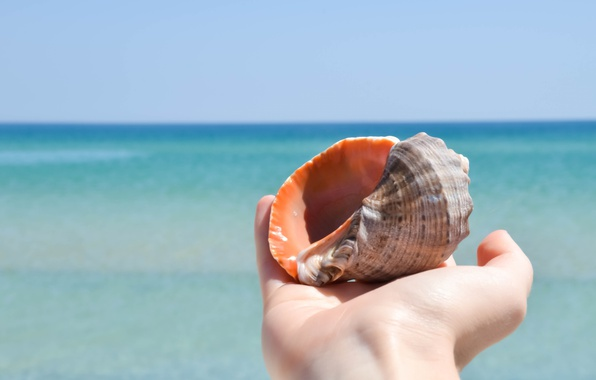 Picture sea, summer, hand, shell