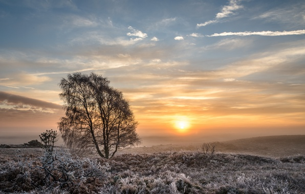 Picture winter, field, tree, morning