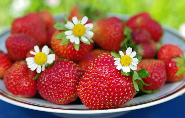Picture summer, flowers, nature, berries, chamomile, beauty, positive, harvest, strawberry, dessert, vitamins, cottage, treat, July, red, …
