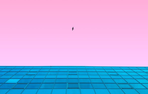 Picture the sky, flight, style, background, pink, bird, the building, view