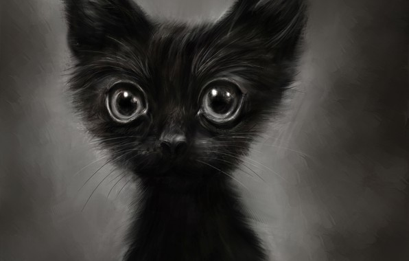 Picture kitty, figure, funny, by Lusidus