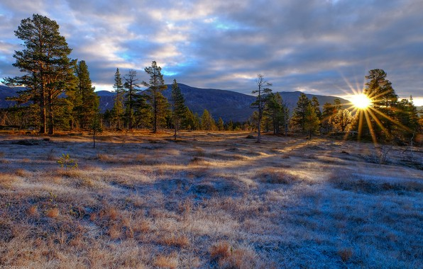 Picture frost, forest, the sky, grass, the sun, clouds, rays, trees, mountains, dawn, glade