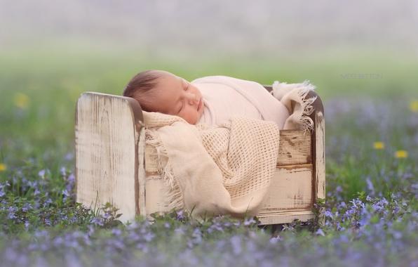 Picture flowers, sleep, baby, bokeh, cot, sleep