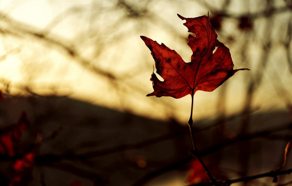 Picture autumn, macro, light, red, sheet, color, branch