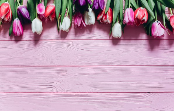 Picture Flowers, Tulips, Board, Background, Buds