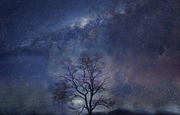 Picture night, tree, stars