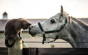 Wallpaper cat, horse, friends
