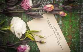 Picture flowers, bouquet, Bud, postcard, eustoma