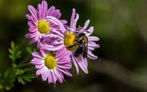 Picture flowers, bee, background