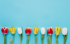 Picture Flowers, Tulips, Background