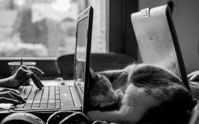 Picture black & white, photo, computer, monochrome, mood, Cat, animal, b&w, situation, sleeping, laptop, work, fur, …