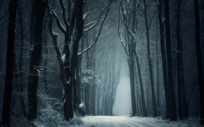 Picture winter, road, snow, trees, nature