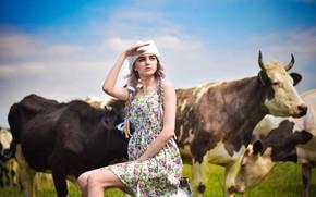 Picture girl, cows, milkmaid, Arina Kolomiets