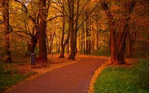 Picture autumn, Park, track