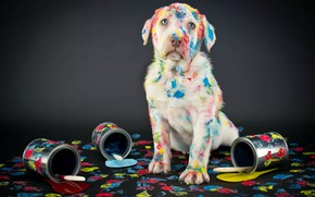 Picture paint, Labrador, background, labrador, Retriever, dogs, retriever