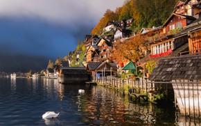 Picture water, birds, lake, home, Austria, swans, Austria, Hallstatt, Lake Hallstatt, Hallstatt, Lake Hallstatt, Hallstatt