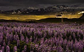 Picture light, flowers, mountains, nature, morning, temple