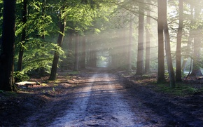 Picture road, forest, summer, light