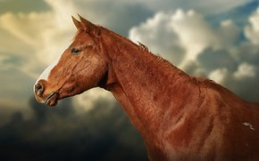 Picture face, background, horse, horse, texture, profile