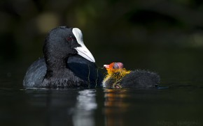 Picture water, bird, baby
