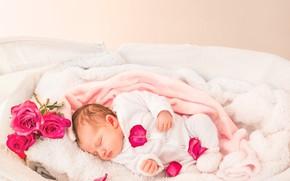 Picture winter, happiness, heat, roses, petals, baby, sleeping, baby
