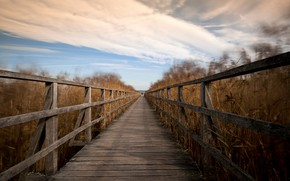 Wallpaper autumn, bridge, reed
