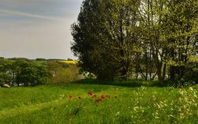Picture greens, summer, grass, the sun, trees, river, field, sheep, England, Maki, Cornwall, Saltash