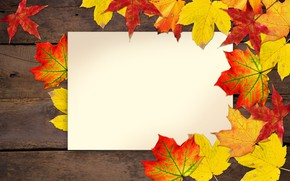 Picture autumn, leaves, postcard, blank