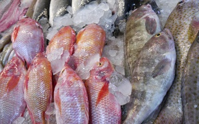 Picture ice, fish, seafood, Frozen meat