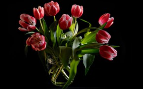 Picture leaves, flowers, bouquet, tulips, vase, black background, buds