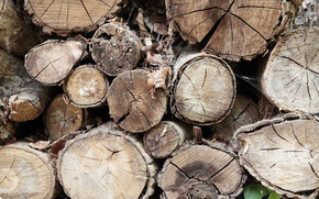 Picture wood, pattern, Trees, firewood
